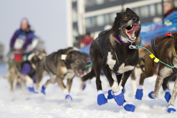 dogsled_PC_517_full