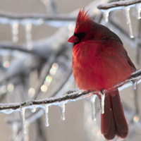 How to Attract and Photograph Birds in Your Own Backyard