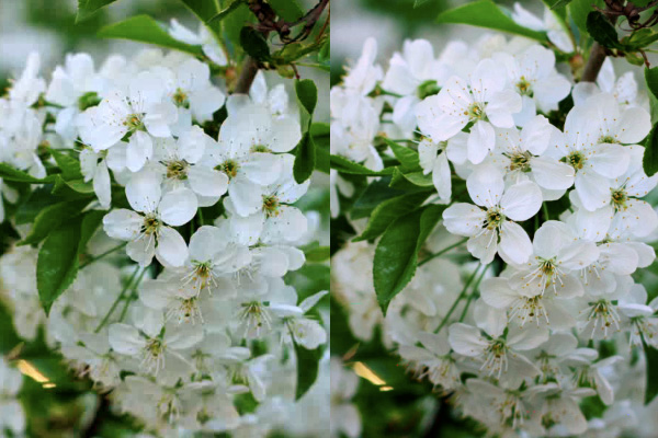 On the left, you see the image before this selective contrast technique is applied. On the right, you see the final effect.