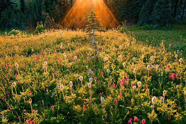 Ian-Plant_Light-Is-Life