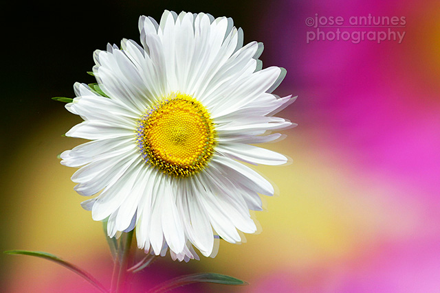 10 secrets for better flower photography flowers10tipsja08 mightylinksfo