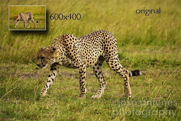 safari300b