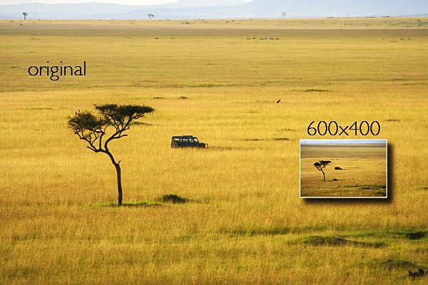 safari300d